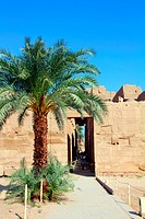 famouse karnak temple in Luxor