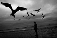 Seagulls fly over a fisherman on the beach of Manta, Ecuador, 14 September 2012  Every morning, hundreds of shark bodies and thousands of shark fins a...