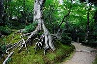 Jojakko-Ji Temple, Arashiyama