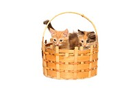 Two kittens in basket