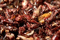 Fried grasshoppers on a market stall