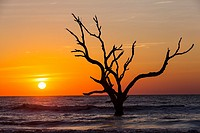 Sunrise over Boneyard Beach on Bulls Island, South Carolina  Bulls Island is a Sea Island 3 miles off the mainland and part of the Cape Romain Nationa...