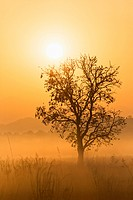 India, Uttarakhand, View of Mystic morning at Jim Corbett National Park