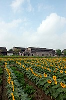 China village near the sunflower field