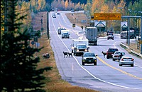 A shot of the east gate of Jasper National Park with traffic and animals on the highway.