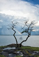 Sailboats and a rainbow framed by a bare tree