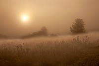 USA, Colorado, Colorado Springs, Palmer Park. The sun penetrates morning fog over field. Credit as: Don Grall / Jaynes Gallery / DanitaDelimont.com