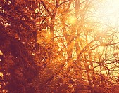 Misty forest  Abstract autumnal backgrounds for your design