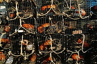 Detail of lobster traps