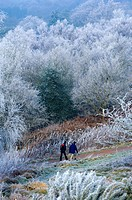 Walkers in the Malvern Hills