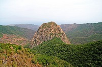 Rock in El Cedro forest in La Gomera island Spain