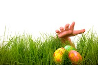 Easter egg hunt. Kids hand and easter eggs hidden in fresh green grass. Isolated on white background