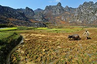 Vietnam, Ha Giang, man of Hmong ethnic goup ploughing his field