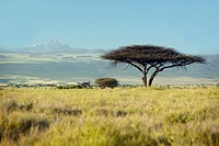 Mount Kenya and lone Acacia Tree at Lewa Conservancy, Kenya, Africa