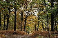 forest path, Forest of Rambouillet, Yvelines department, Ile-de-France region, France, Europe