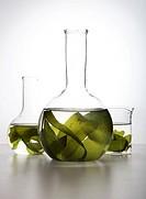 Seaweed Floating in Labglass