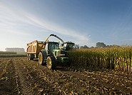 corn harvest with tractor, trailer and combine