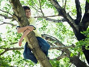 Low angle view of a boy lying on the branch of a tree