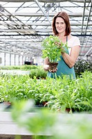 Germany, Bavaria, Munich, Mature woman in greenhouse with basil plants