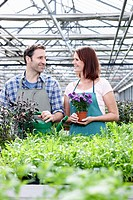 Germany, Bavaria, Munich, Mature man and woman in greenhouse with rocket and basil plant (thumbnail)