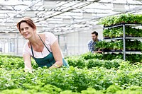Germany, Bavaria, Munich, Mature woman in greenhouse between parsley plants, man standing in background