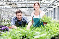 Germany, Bavaria, Munich, Mature man and woman standing with rocket plant in greenhouse