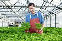 Germany, Bavaria, Munich, Mature man in greenhouse between parsley plants (thumbnail)
