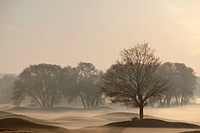 Trees on golf course at sunrise on a misty autumn morning, caledon, ontario, canada