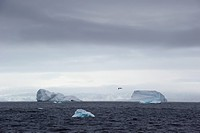 Icebergs in the southern ocean, antarctica