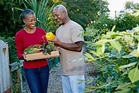 Black couple gathering vegetables in community garden