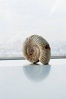 Fossil of ammonite