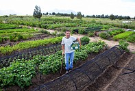 Farmer working in market garden
