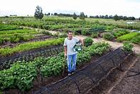 Farmer working in market garden