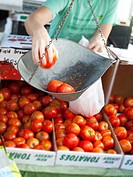Person weighing out tomatoes at farmers market.