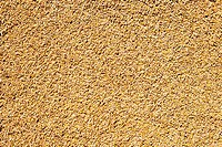 cereal wheat grain texture pattern