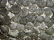 brain coral as masonry stones