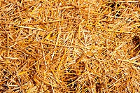 cereal straw just after harvesting
