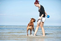 Woman playing with a boxer in the water, Baltic Sea, Mecklenburg_Western Pomerania, Germany, Europe