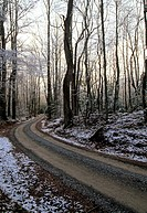 Winter Scene, Road, Greenbrier, Great Smoky Mtns NP, TN