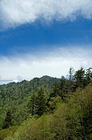 Springtime View, Morton Overlook, Great Smoky Mtns NP, TN