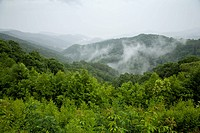 Great Smoky Mtns Nat. Park, TN_NC