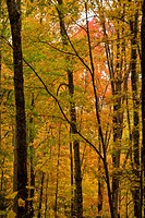 Autumn, Cherokee National Forest