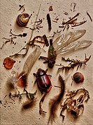 Insects and other elements from nature