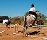 jumping grey horse