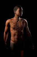 Anatomical model showing the rib cage and upper bones of the human skeleton.