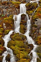 Roadside cascade with moss on the Icefields Parkway, Banff National Park, Alberta, Canada