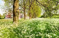 Suburb in spring
