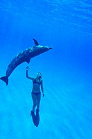 Snorkeler swimming with an Atlantic Spotted Dolphin.