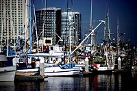 Harbor in San Diego