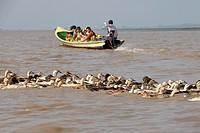 Duck crossing Inle lake, Shan state, Myanmar, Burma